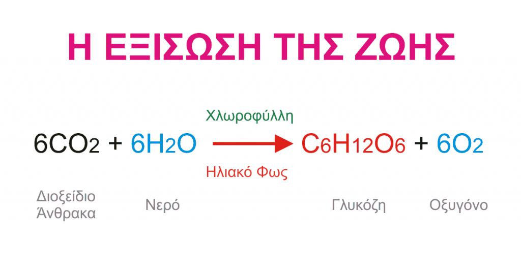 Εξίσωση της φωτοσύνθεσης