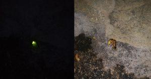 Πυγολαμπίδα στον κήπο