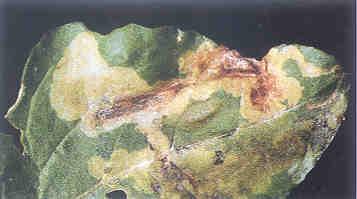 dis-filloriktis-teftlon-bayer02